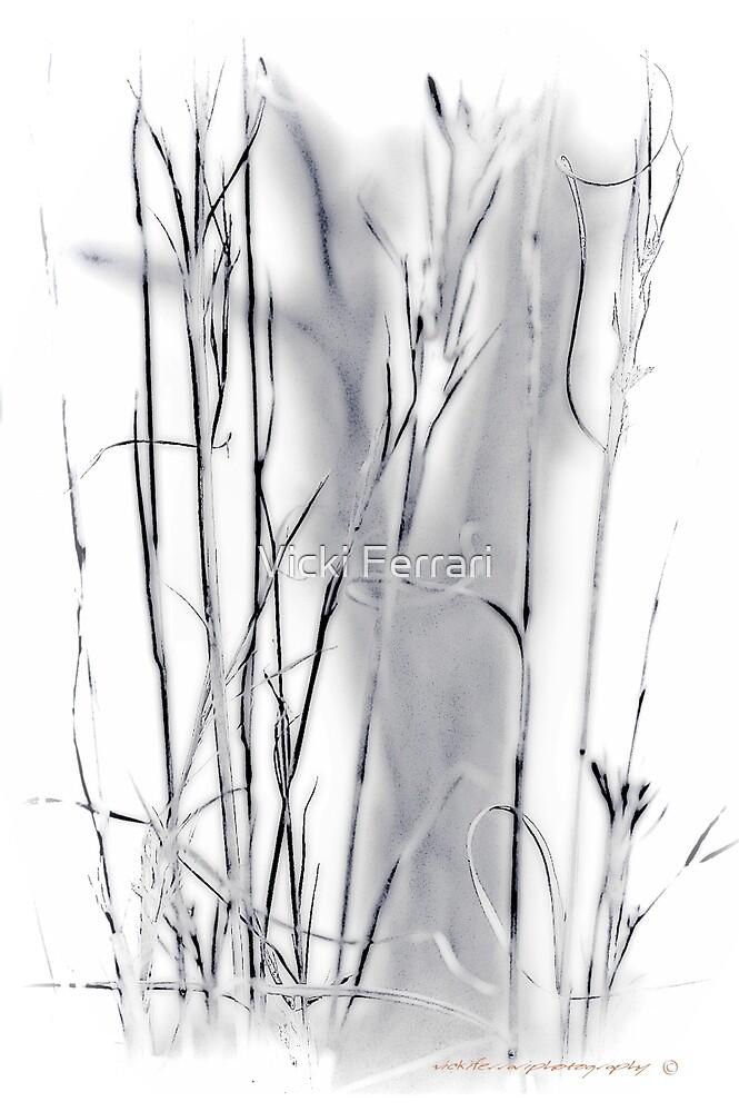 Sentinel Shadow © Vicki Ferrari Photography by Vicki Ferrari