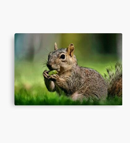 Lunchtime Canvas Print