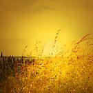 SUMMER DREAMS by leonie7