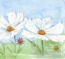Dreaming of a white Cosmos summer by Maree  Clarkson