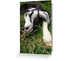 Stretching in the sun Greeting Card