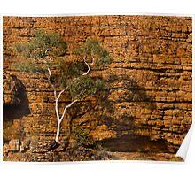 Tree in rocks - Kings Canyon, Northern Territory, Australia Poster