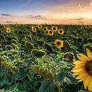 flowerpower by Ditze