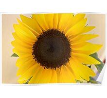 Sunflower, Sunflower Poster