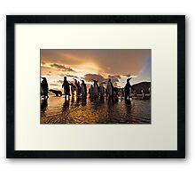 South Georgia Sunrise of Kings Framed Print