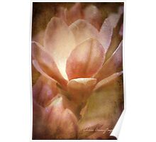 Magnolias 1 Poster