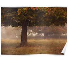 Peeping under the autumn canopy Poster