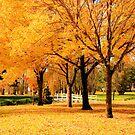 Autumn by bekita