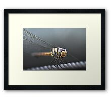 Dragon on a wire Framed Print