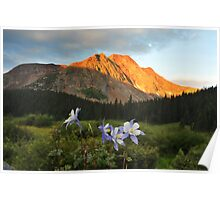 Colorado Columbine and red mountain Poster