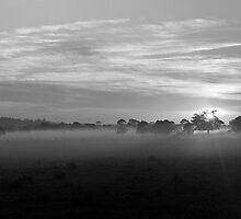 Oxley Sunrise by Jodie Bennett