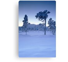 Snowy and frosty trees Canvas Print