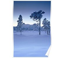 Snowy and frosty trees Poster