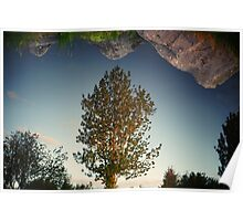 a tree reflection Poster