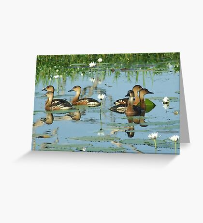It's a family affair - Yellow River, Kakadu, Northern Territory Greeting Card