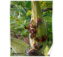Milkweed bugs - party time! Poster