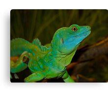 Mr. Lizard - Plumed Basilisk Lizard Canvas Print