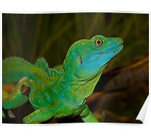 Mr. Lizard - Plumed Basilisk Lizard Poster