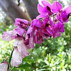 Trailside flower spray by WeblightStudio