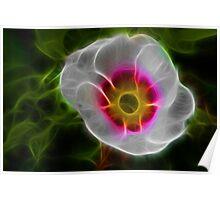 Primula Flower Fractal Art Poster