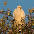 Treetop At Dusk by byronbackyard