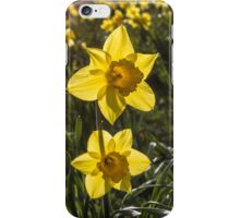 Daffodil Flowers iPhone Case/Skin