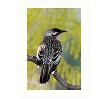 Young Adult Red Wattlebird Art Print