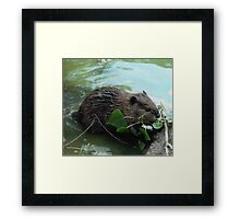 Beaver - Photography Framed Print