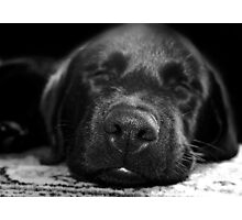 time for a nap Photographic Print