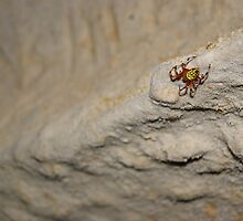 Creepy Crawler by Richard Williams