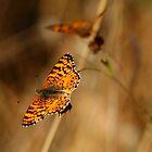 Fall Butterfly by cherylwelch