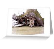 Winter Tree Roots Greeting Card