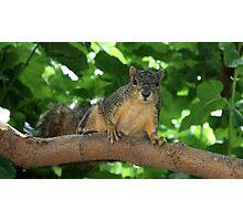 Squirrel Adventures Photographic Print