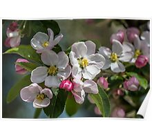 Branch of Blossom Flowers Poster