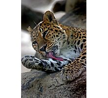 Big cat with huge paws.....and teeth! Photographic Print