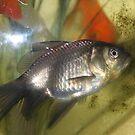 Fish by jomash