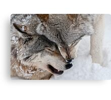 Special Moment Metal Print