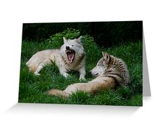 Grey Wolfs (Canis lupus), Greeting Card