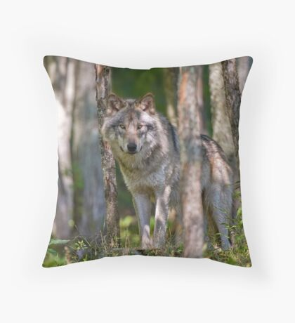 Timber wolf in Forest Throw Pillow