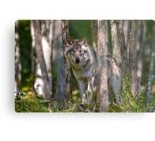Timber wolf in Forest Metal Print