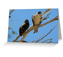 Red-tailed Hawks ~ Paired Greeting Card