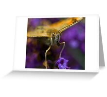 The beautiul orange butterfly Greeting Card