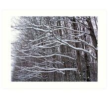 Snow on limbs of a tree Art Print