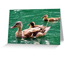 Mother Duck And Babies Greeting Card