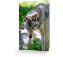 Timberwolf Greeting Card