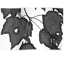 Leaves & Holes Poster