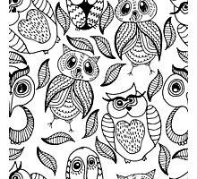 Four different black owls Photographic Print