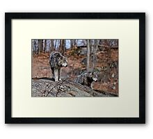 Timber Wolves on Rocks Framed Print