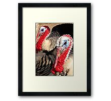 Narragansett Turkeys Framed Print