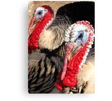 Narragansett Turkeys Canvas Print
